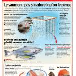 Pisciculture - Le saumon : pas si naturel qu'on le pense